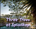 Three Trees At Spioenkop